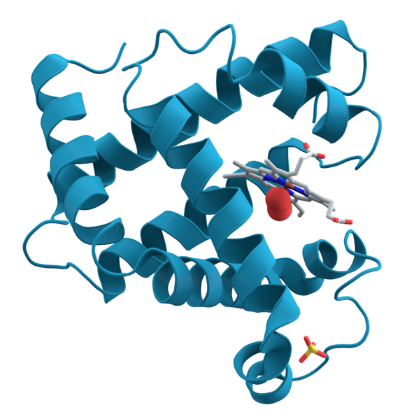 592px-Myoglobin.png